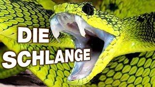 Die Schlange - Anatomie und Biologie | Alternative Fakten fürs Referat | Parodie