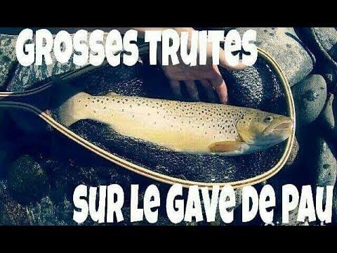 GROSSES truites sur le GAVE de PAU Pyrénées-Atlantiques . NO-KILL et HD