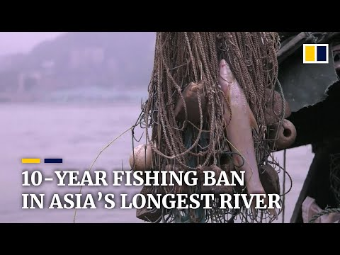 China imposes a 10-year fishing ban for Yangtze River to protect marine biodiversity