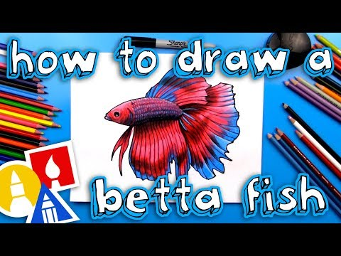 How To Draw A Realistic Betta Fish (Siamese Fighting Fish)