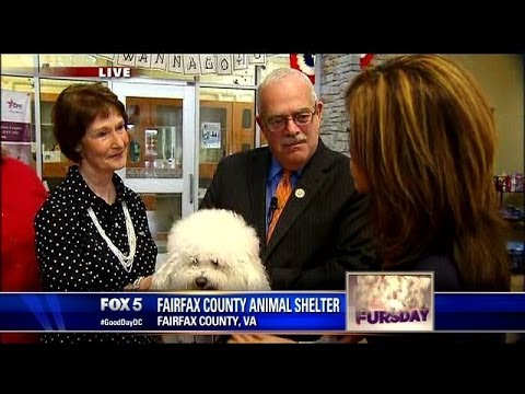 FOX Fursday: Fairfax County Animal Shelter recognized for major achievements