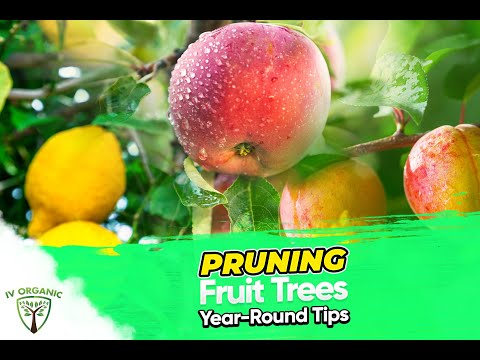 5 Year-Round Pruning Tips | Feat. Isabelle & Victoria