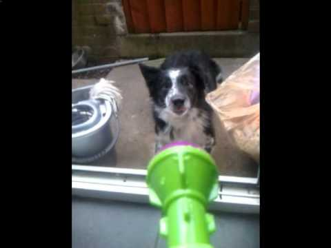 woody the stupid dog.wmv