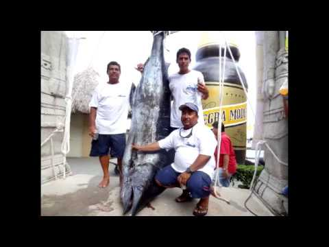 PV Sportfishing 1st Place Marlin With Captan Steve Torres In Puerto Vallarta 2013