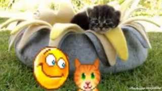 Домики для кошек Купить