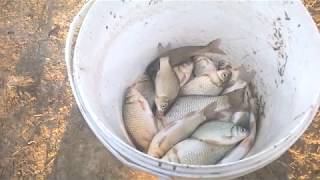 Осенняя рыбалка в Андреевке Ловля карася