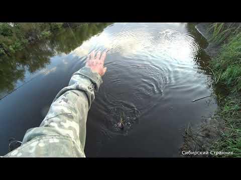 Этот ручей и речкой то не назовешь. Но сколько же там рыбы.