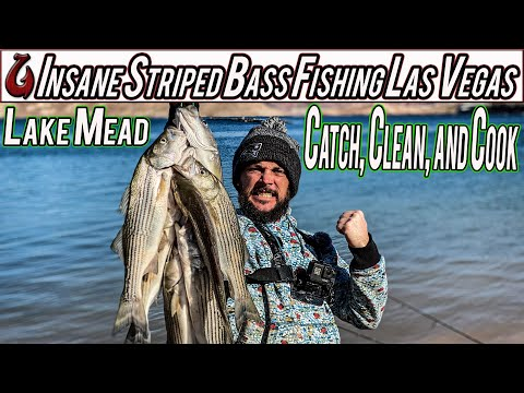 Las Vegas Fishing At Lake Mead = Striped Bass INSANITY! Catch, Clean, And Cook (EPIC)