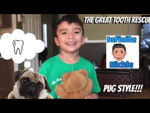 Infinite Nickle: The Great Tooth PULL!! Gus Gus the pug pulls my tooth!! - YouTube