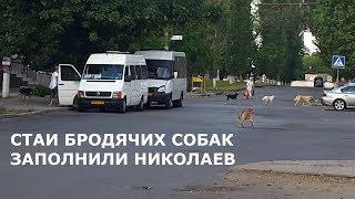 Бродячие бездомные собаки в Николаеве. Город заполнен дикими животными