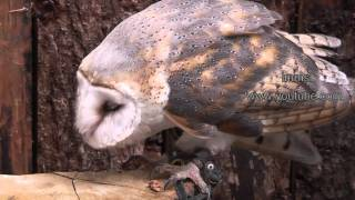 Owls - An Amazing  Collection Of Owls