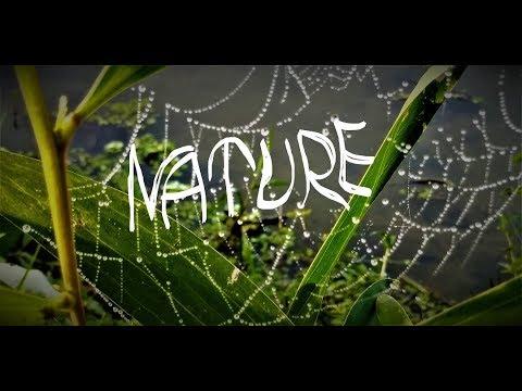 Nature 01 ll Bangladesh ll papyrus ll Father of Paper