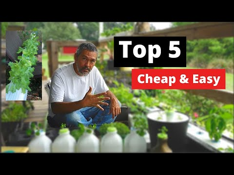 5 things you need to start growing hydroponic plants  - YouTube