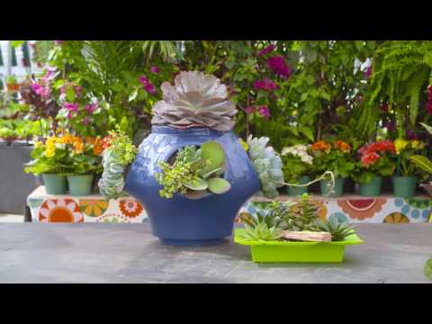 Adding Succulents with TERRA Featuring...