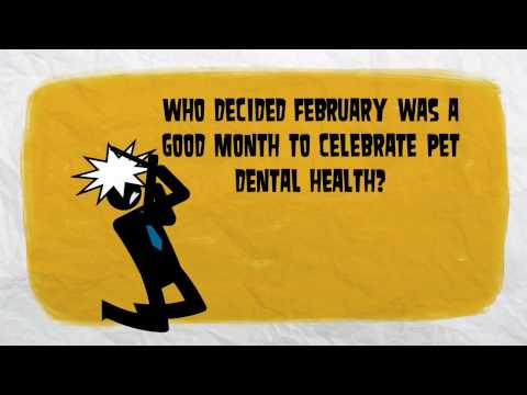 Join San Jose Veterinarians as we Flip-the-Lip to Save You Money