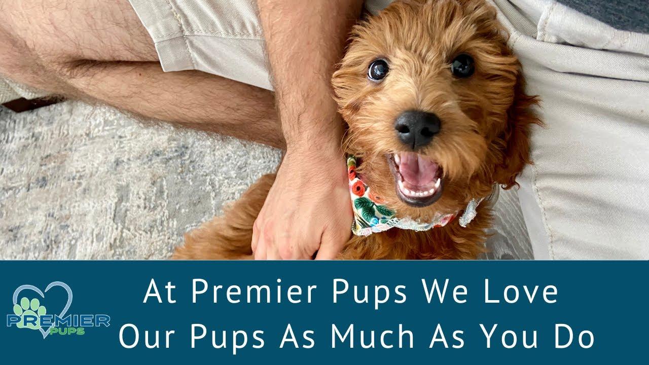 Premier Pups LLC | Better Business Bureau® Profile