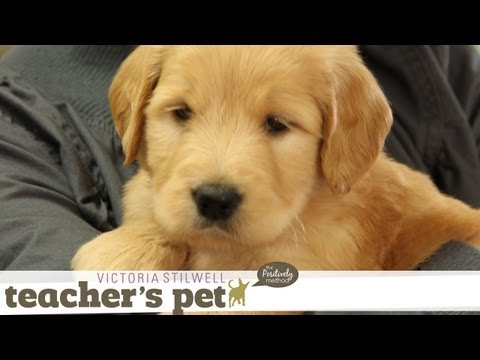 Positive Early Learning for a Puppy | Teacher's Pet With Victoria Stilwell