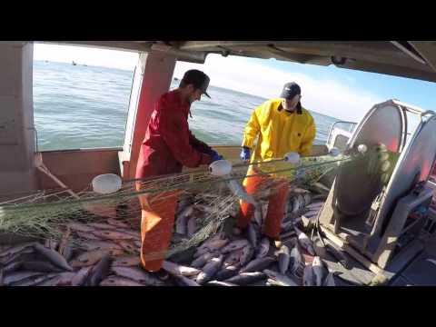 Alaska salmon season 2016