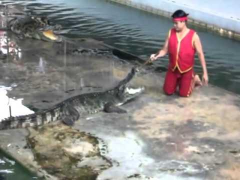 Tai nạn kinh hoàng khi biểu diễn với cá sấu