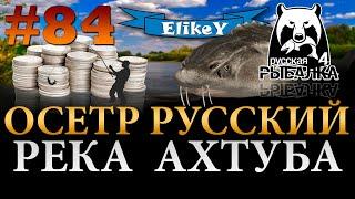 Большие Деньги Осетр Русский Как Ловить Какие Снасти Река Ахтуба Русская Рыбалка 4 84