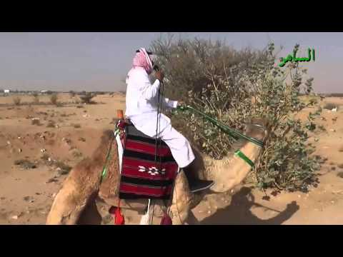 arabia - a man from Otiabi tribe go to shammar tribe