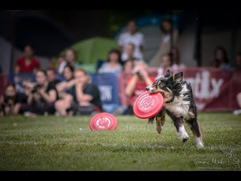 100% disc dog freestyle