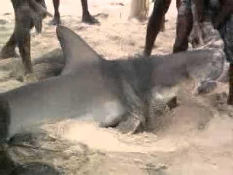 shark attack in arthunkal beach