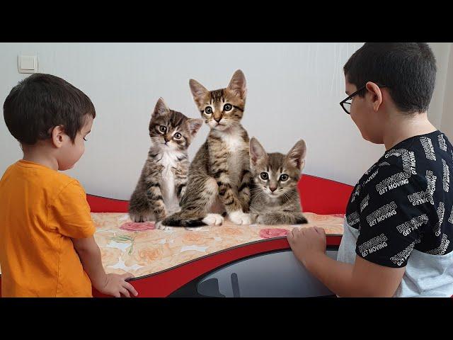 Beratın Yatağında Küçük Kediler Var. Little Cats in The Bed Fun Kids Video