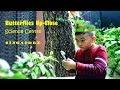 Minh Khang biết tuốt | Nhà sinh vật học nhí tại vườn Bướm Trung tâm Khoa học Singapore