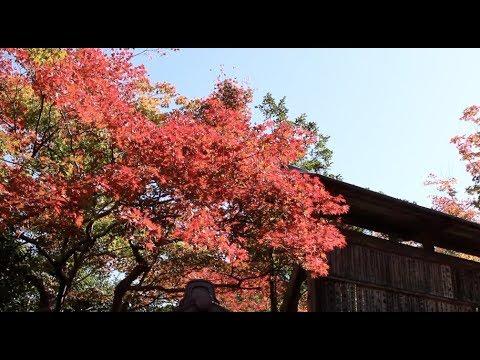 京都紅葉情報 2017 清凉寺 Kyoto autumn Information 2
