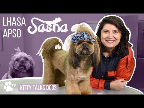 Grooming Sasha the Lhasa Apso | Kitty Talks Dogs  TRANSGROOM