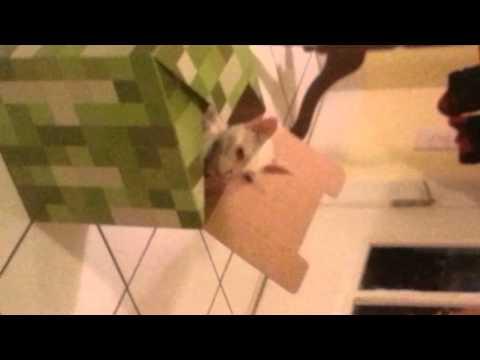 Creeper cat escapes
