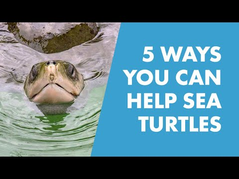 Conservation Tips in Honor of Coral the Sea Turtle