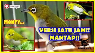 Download Lagu Terapi Pleci Montanus Dijamin Langsung Gacor Versi Satu Jam mp3
