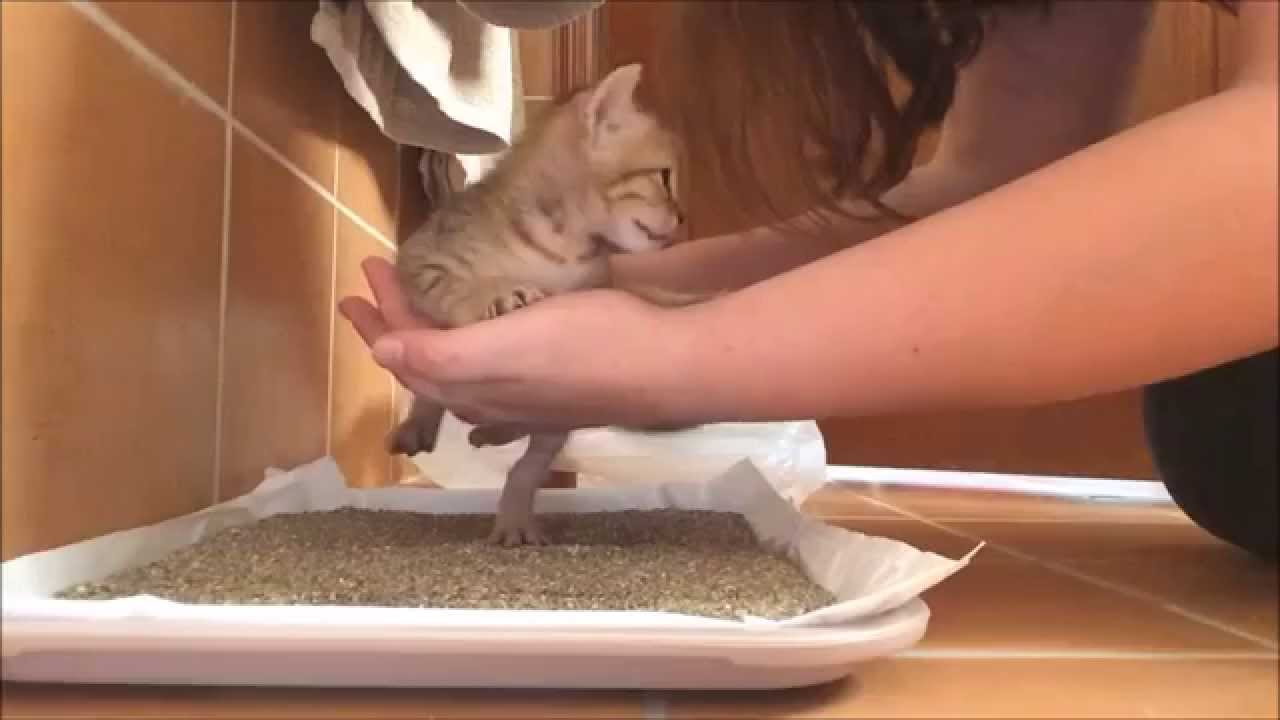 Basics of Raising Kittens