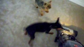 Ferocious Killer Dogs In Brutal Attack Mode