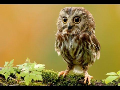 Картинки крутые совы
