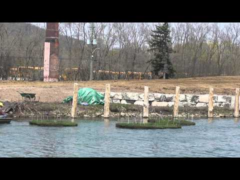 EcoPark Campaign - Floating Islands on the Desjardins Canal