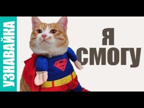 Когда сможет кошка моргать после наркоза? Узнавайка.