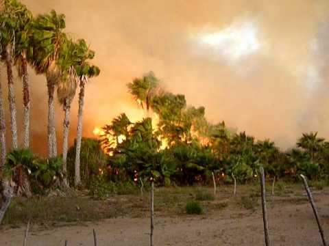 TODOS SANTOS HUERTA FIRE 3-24-10 2