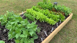 My 1st Garden: June 2019 Organic Garden Update ~The Kneady Homesteader