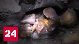 Уникальная находка: в Якутии обнаружили тушу карликового мамонта - Россия 24
