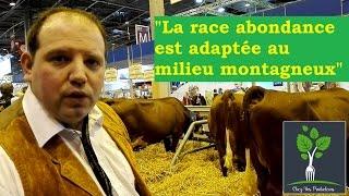 La Race bovine Abondance : Vache laitière en Haute-Savoie