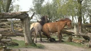 Deux chevaux extrêmement puissants