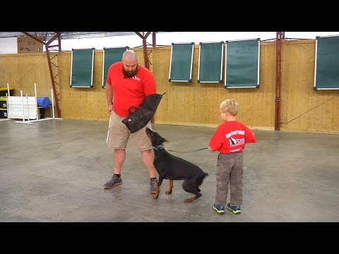 Doberman 'Falon' W/5 Yr Old Handler Showing Off Protection W/Kids For Protection Dogs