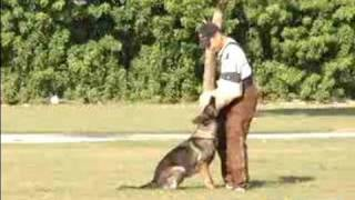 How To Train A Schutzhund : Train Your Dog To Guard For The Schutzhund Protection