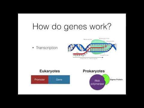 GMO Project Basics