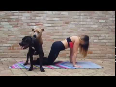 FUNNY. No yoga when you have dogs!!! Best video compilation