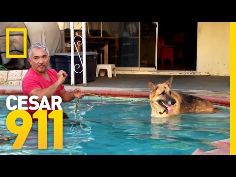 Pool Time Progress | Cesar 911