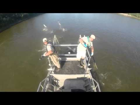 Asian carp netting in Illinois River
